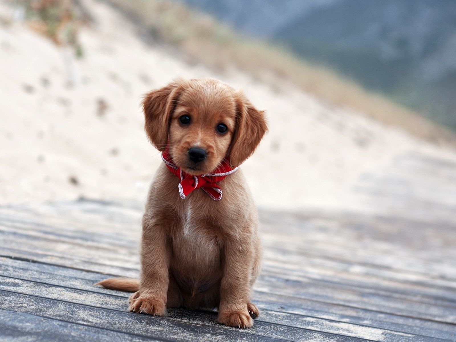 Cute And Adorable Puppy Pictures Cute Animals Cute Puppy