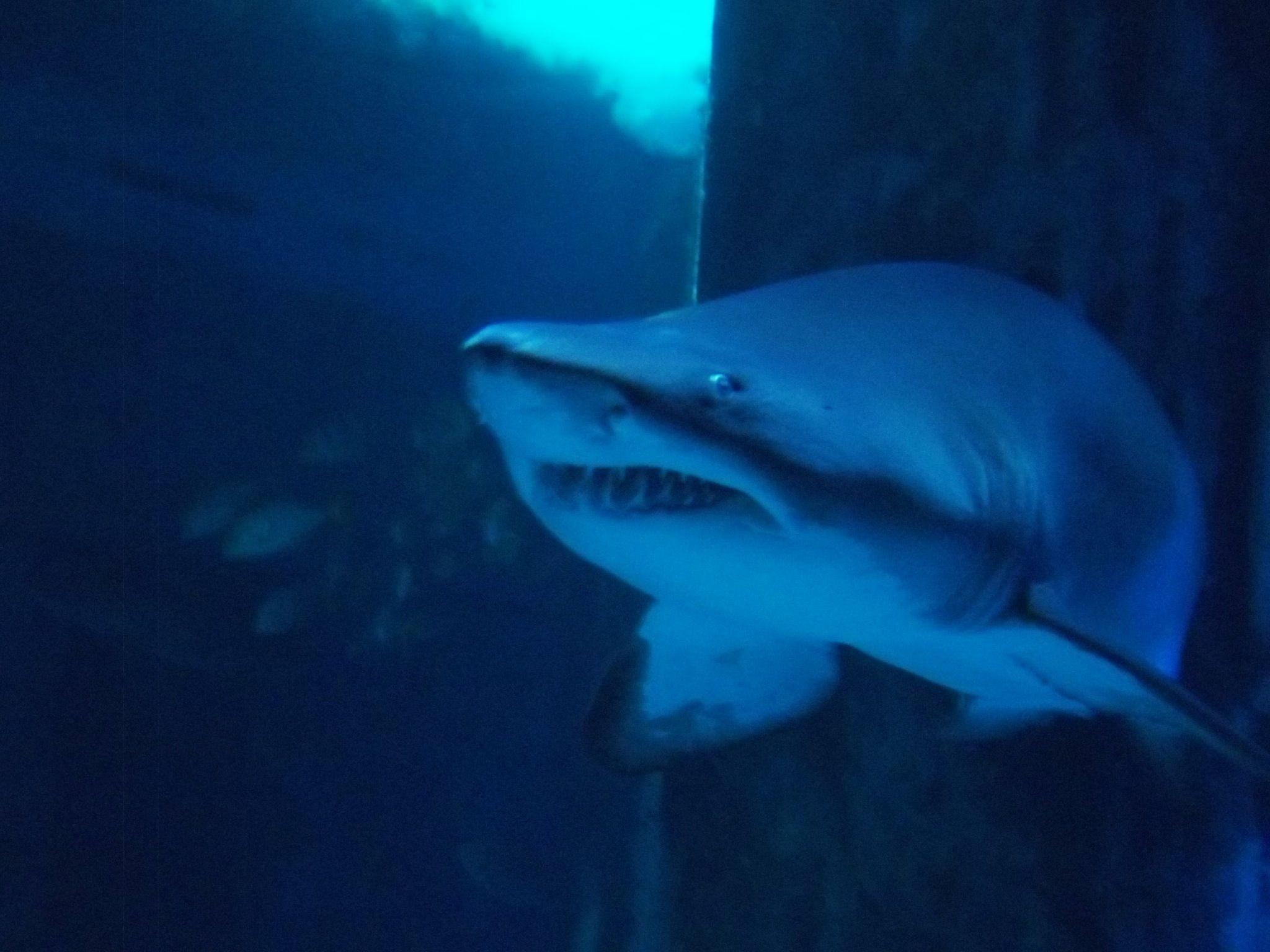 Shark at the London aquarium Fish pet, Pets, Shark