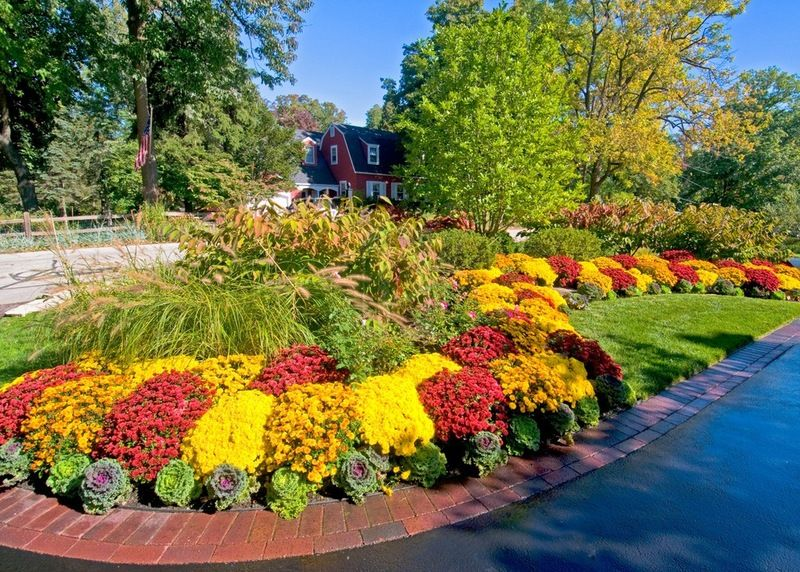 Mums Cabbage Fountain Grass Fall Landscaping Front Yard Landscaping Design Autumn Garden