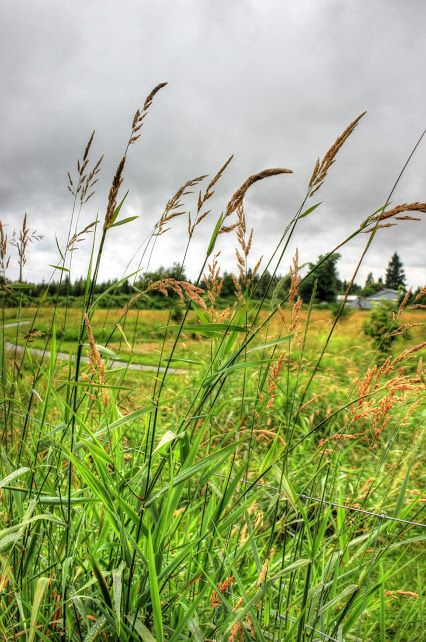 ~Among The Fields~ #grass   #scenery   #field   #landscape   #clouds   #fence   #wire   #nature