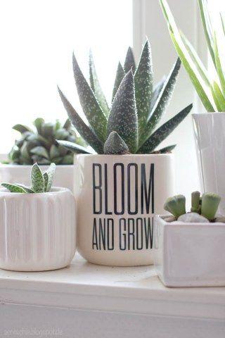Quelle Plante Avoir Dans La Chambre Chambre Bebe Enfant
