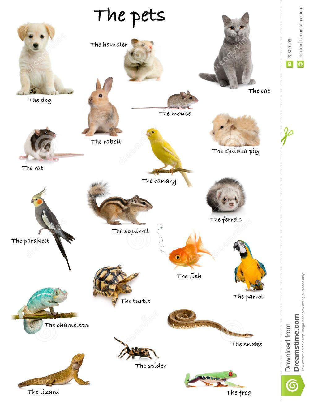 Collage Of Pets And Animals In English Royalty Free Stock Photos Image 22629198 English Vocabulary Learn English Vocabulary English Language Learning
