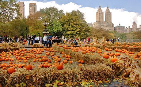 halloween new york activities