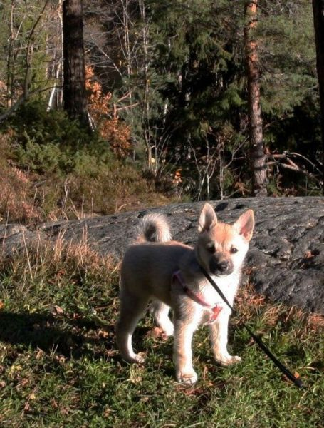 Rare Super Cute Dog Breeds Petbreeds Cute Dogs Cute Dogs Breeds Dog Breeds
