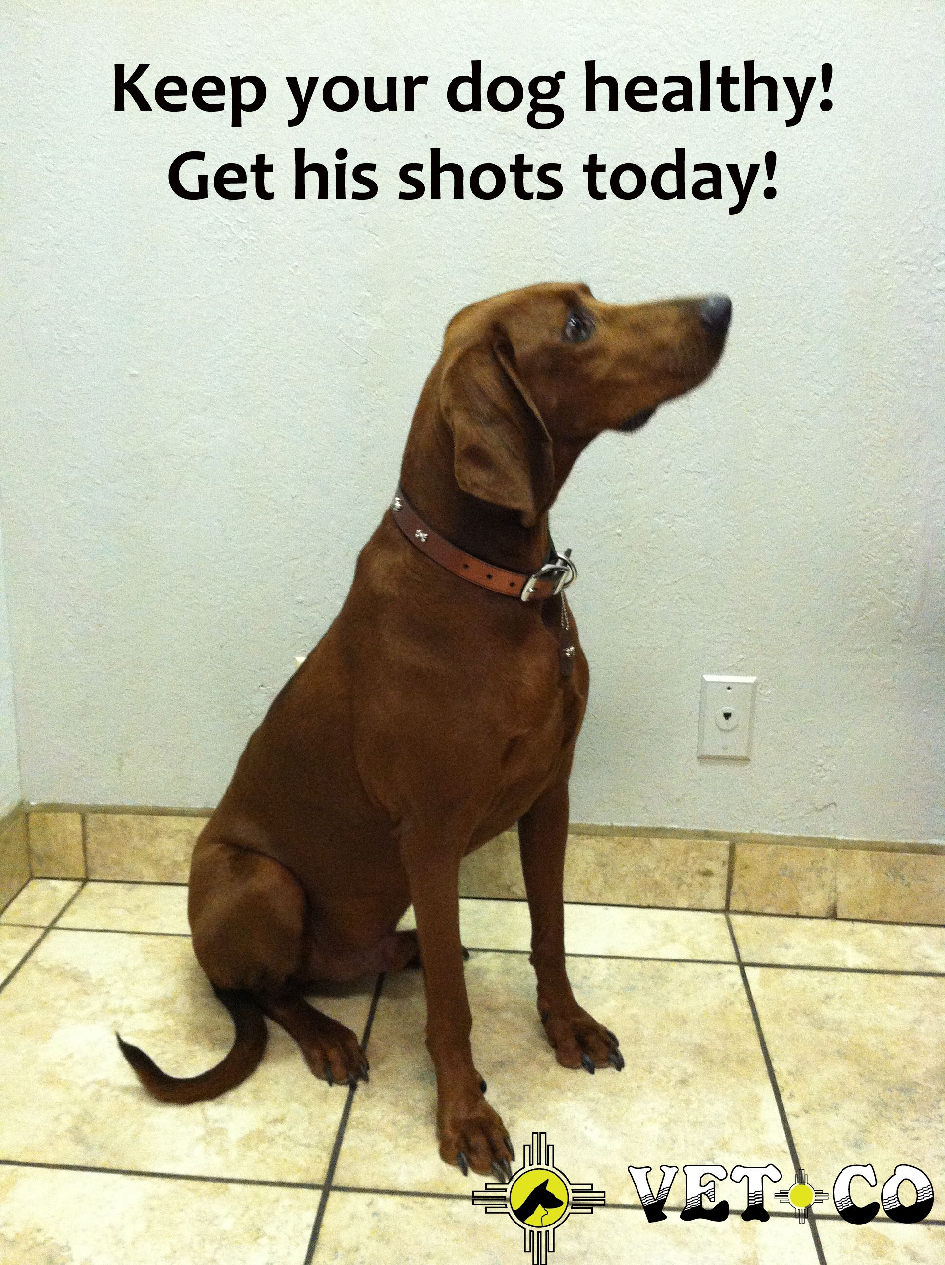 Noah Is A Happy Dog Because He Got His Shots Pet Care Happy Animals Veterinary Care