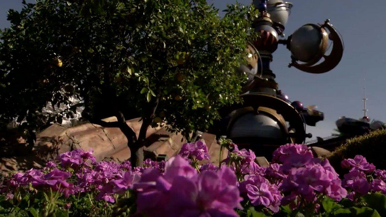 Disneyland Resort Horticulture Team Makes the Parks Blossom in Springtime