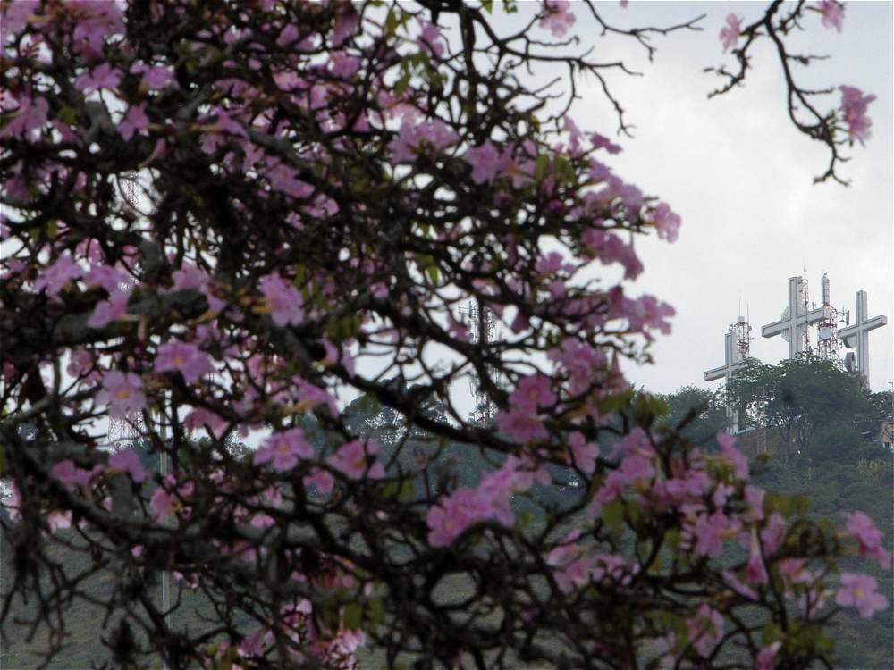 #Cali, en verano, tiene lluvia de flores de colores #OrgullodeCali #CaliCo