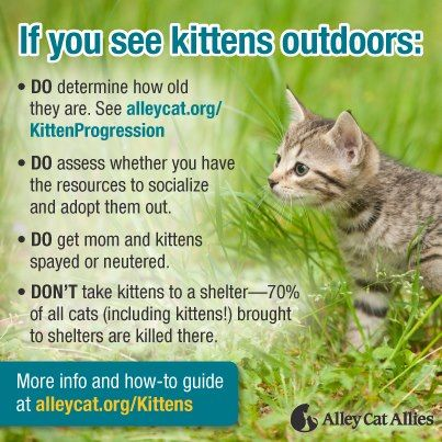 Spring Is Kitten Season If You See Kittens Outdoors With
