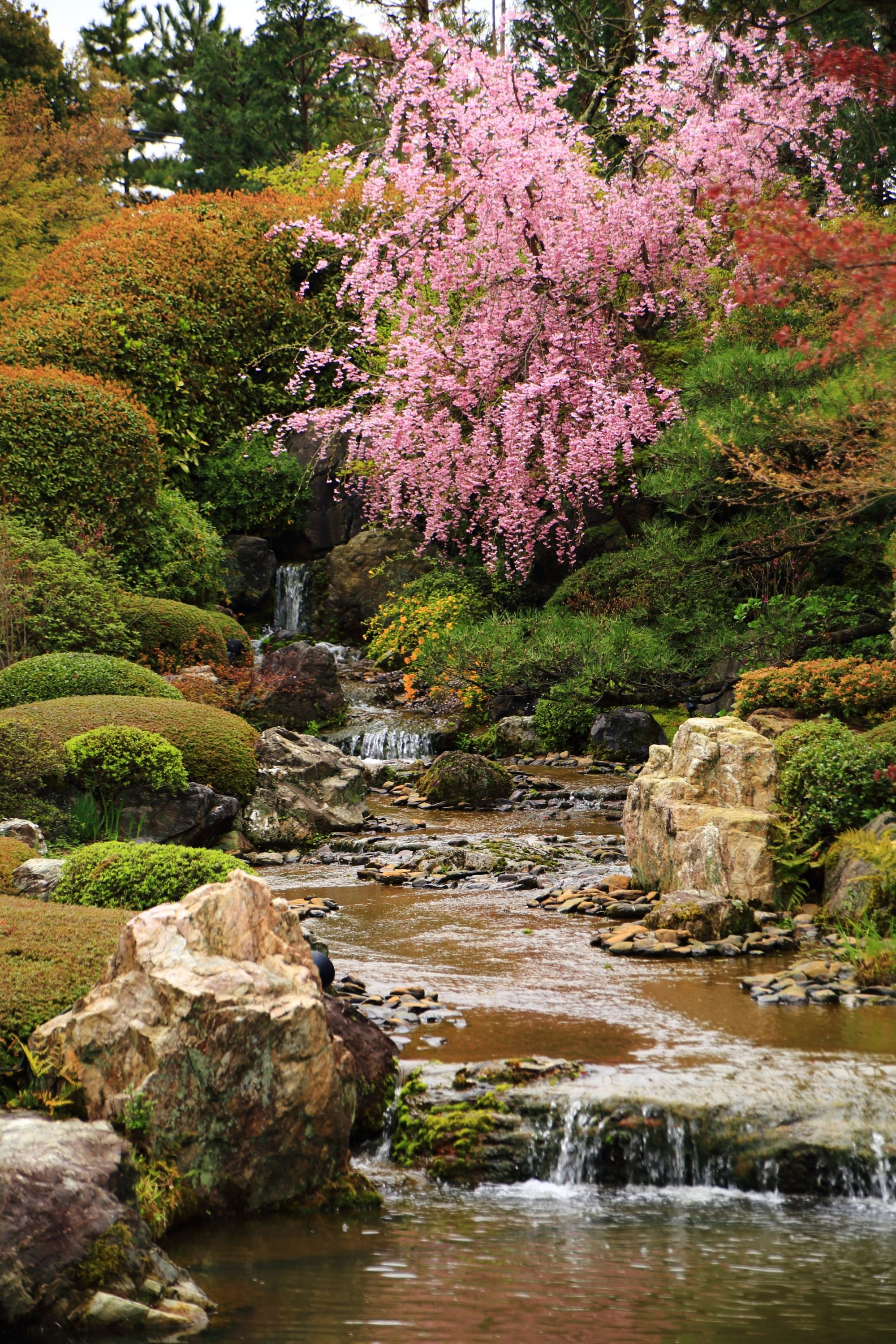 Cherry trees in Kyoto, Japan | Japanese gardens | Pinterest | Cherry ...