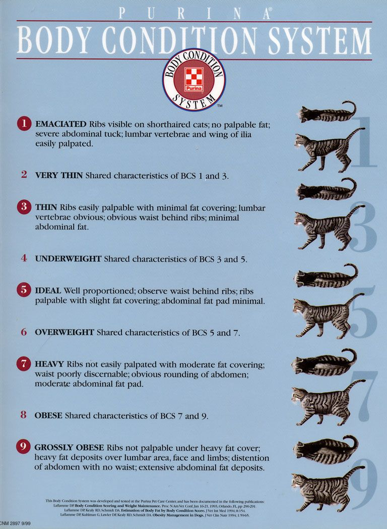 Body Condition System What's your pet's score? Cat