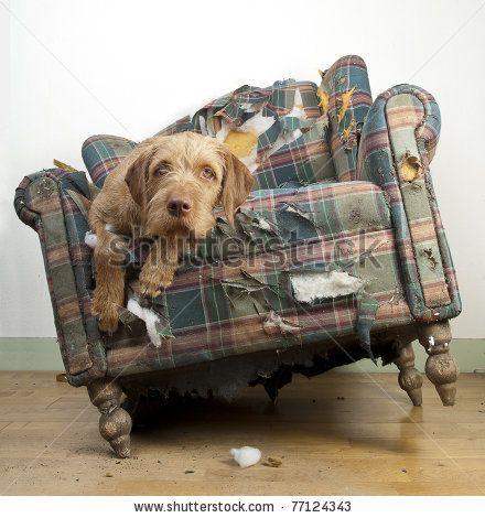 Dog demolishes chair by Jeroen van den Broek
