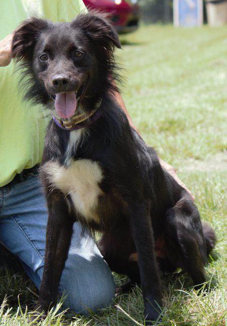 Border Collie Dog For Adoption In Columbus Ga Adn 620622 On