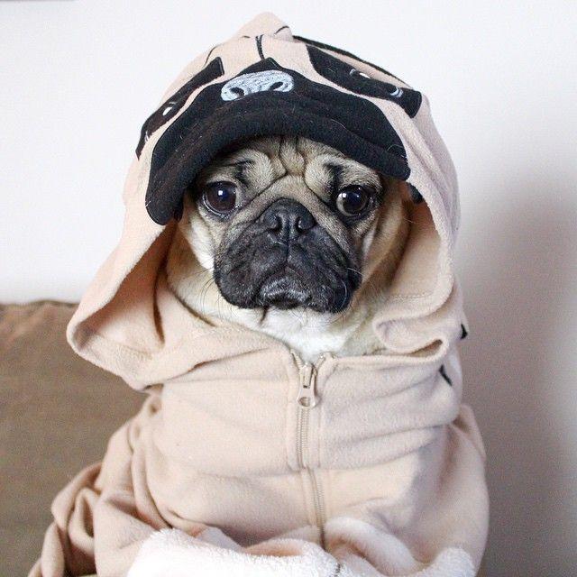 Doug The Pug In A Pug Hoodie That S Pug Inception Pugs