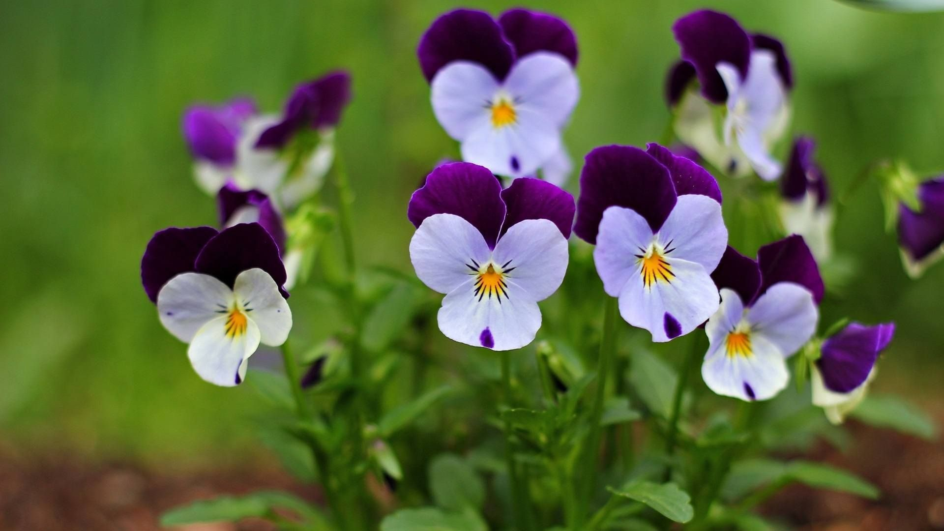 small flowers - Google Search