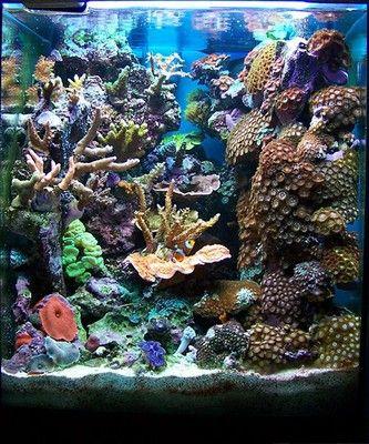 Feature Aquarium Ignasi Torralba S 16 Gallon Nano Reef Koraalriffen Rif Aquarium Koraalrif