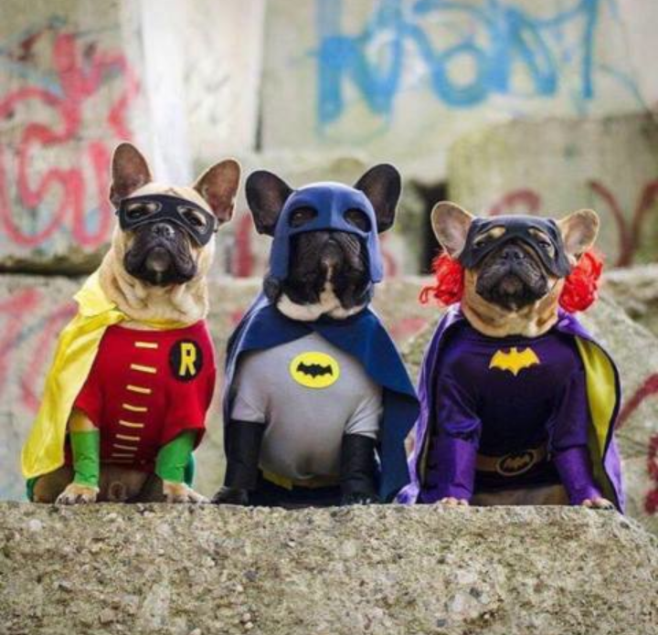 Super Frenchies Cute animals
