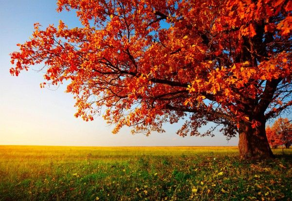 32 Autumn Wallpapers For Pc Backgrounds Iphone Android And Tablets Homescreen Fall Wallpaper Scenery Wallpaper Autumn Trees