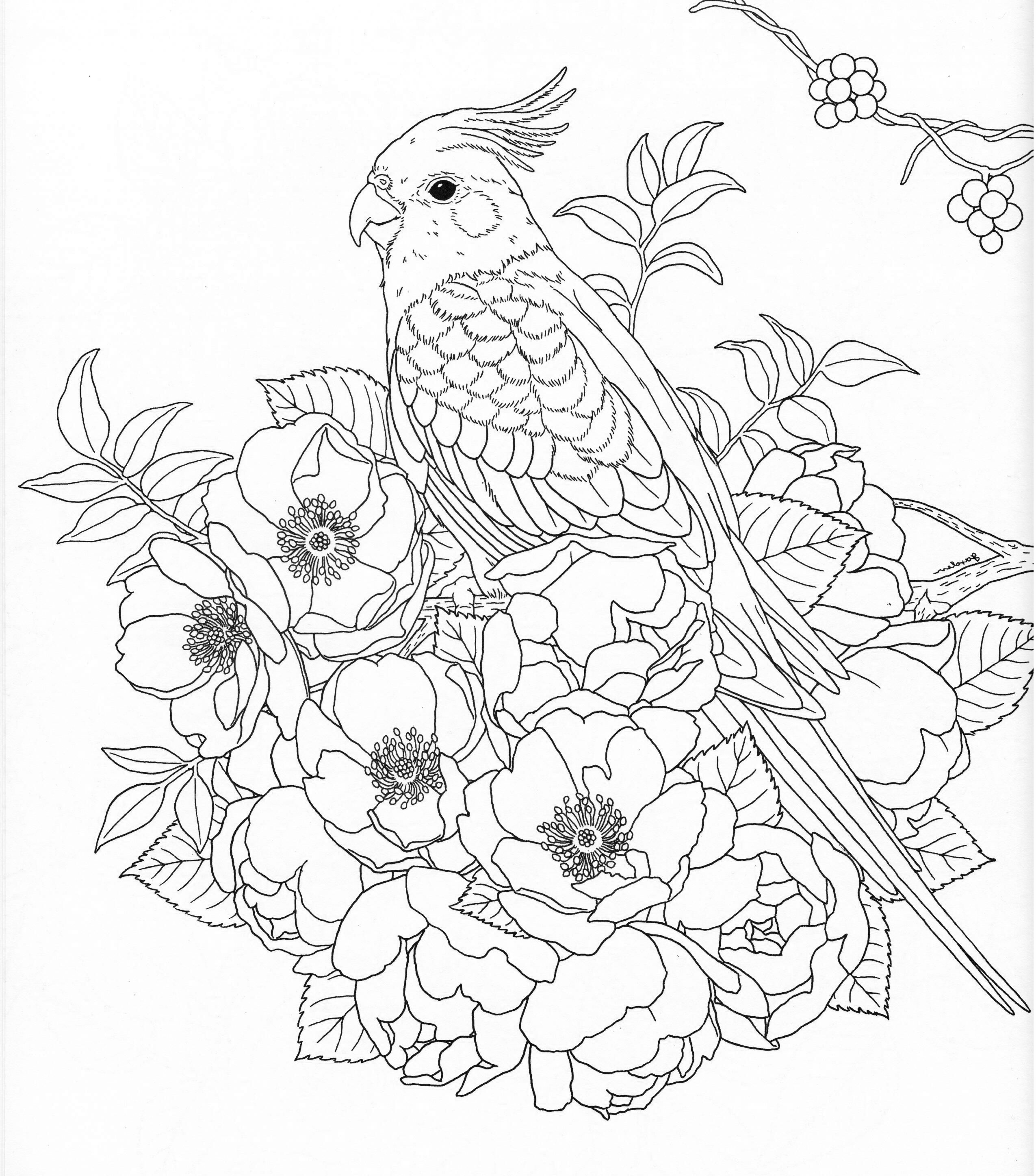 Harmony Of Nature Adult Coloring Book Pg 30