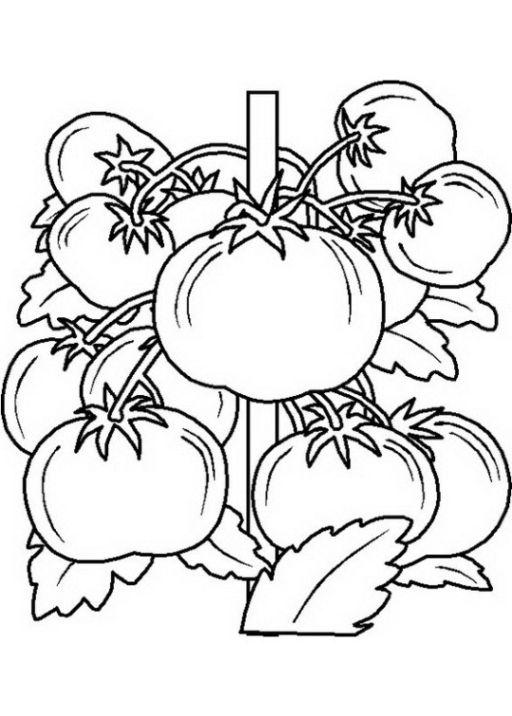 Ausmalbilder zum Ausmalen Malvorlagen Obst und Gemüse kostenlos 2 ...
