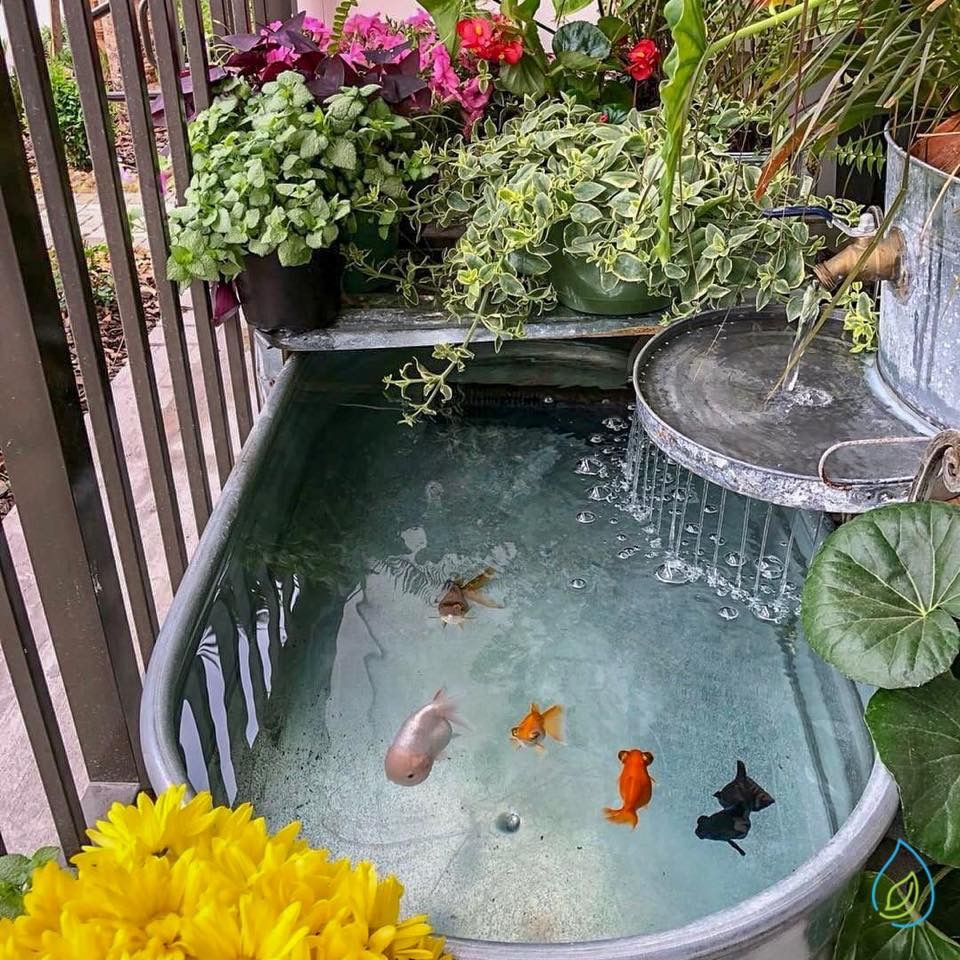 Photo of DIY : Un bassin fleuri avec de jolis poissons colorés