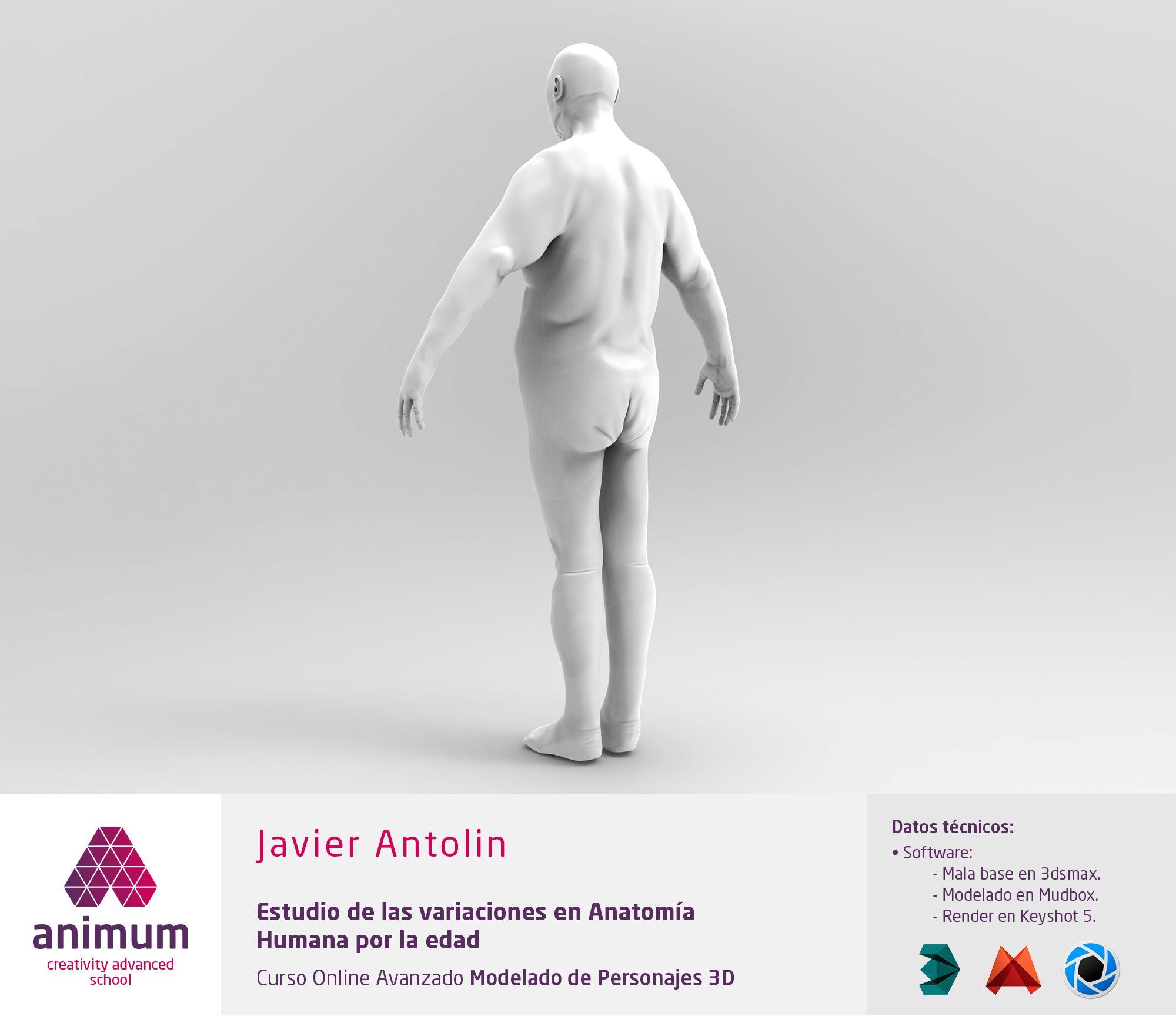 Estudio de anatomía humana. Variaciones por la edad. Vista 3/4 ...