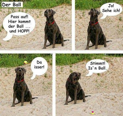 Hunde Community Fun Lustiges Google Funny Animals