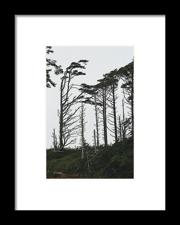 First Line Trees Along The Pacific Ocean Framed Print by Tom Janca ...