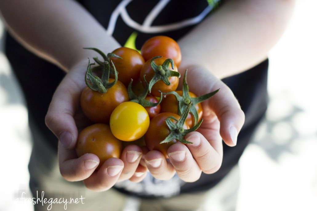 How Do I Know What To Plant After Tomatoes Summer Plants Plants Tomato