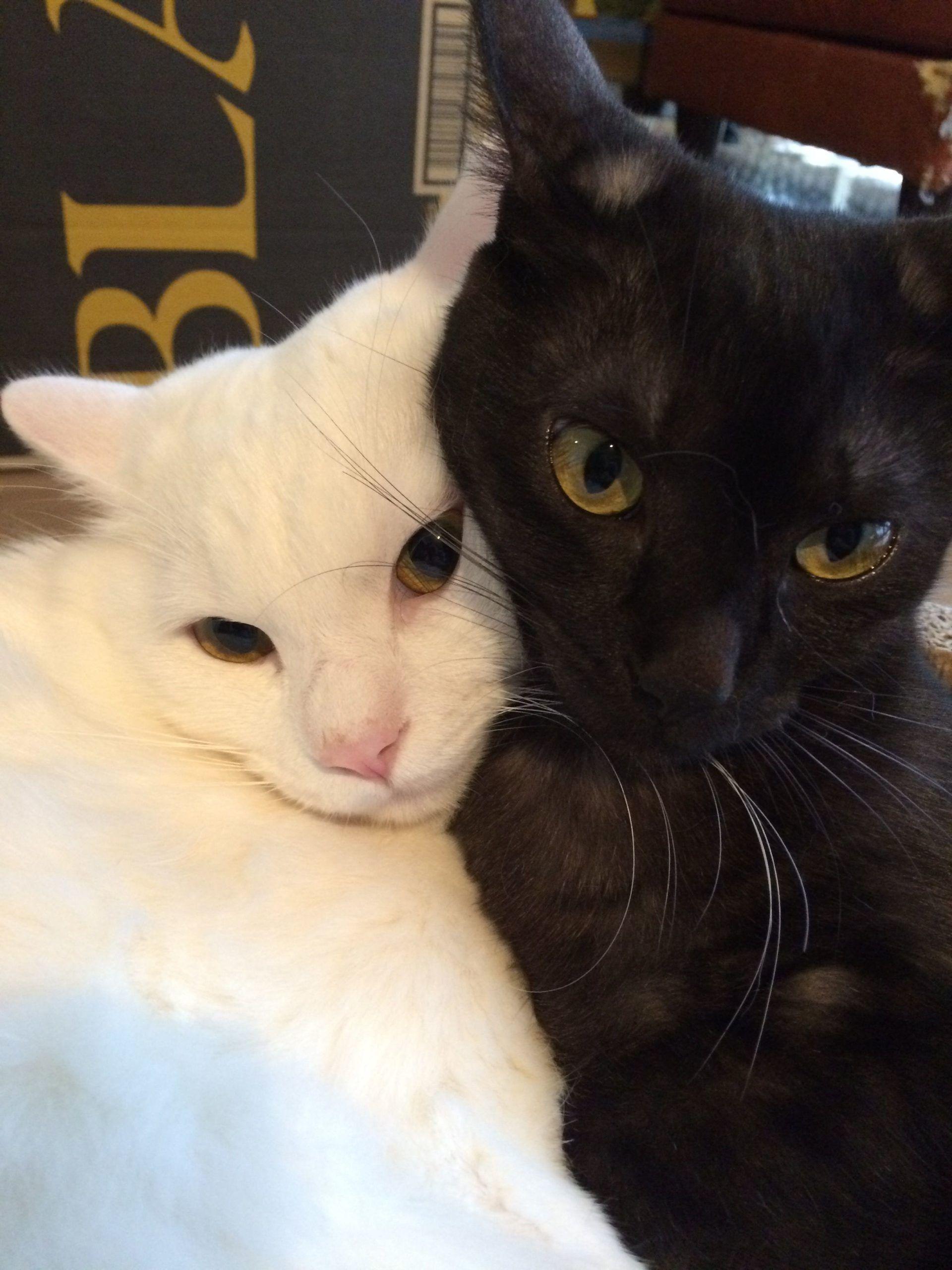 Pin De Narita Em Katzen Memes Engracados De Gato Gatinhos Fofos Fotos De Animais Engracados