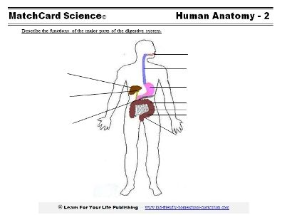 Digestive system worksheets & experiments | Cycle 3 Science ...