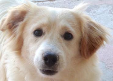 Kokoni X Mix Welpen Wilson Hubsch Und Verspielt Hunde Fotos Animal Room Susseste Haustiere