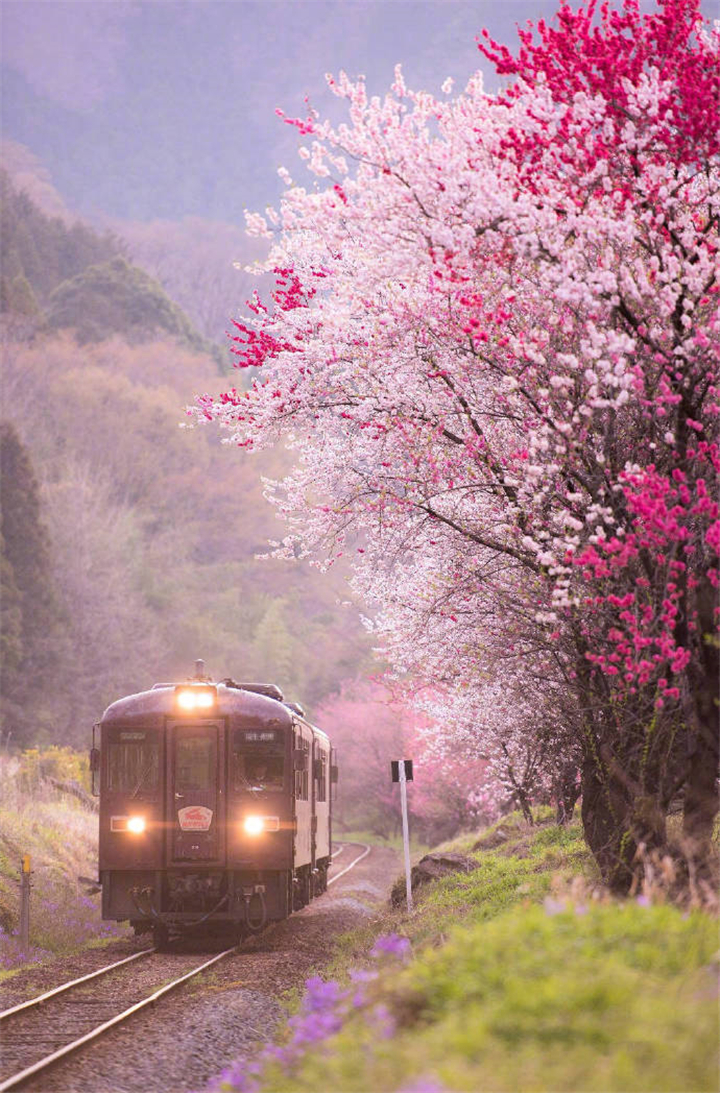 Where Is The Most Beautiful Place To Enjoy Cherry Blossoms In Japan Confirm Beauty Beautiful Landscapes Cherry Blossom Japan Beautiful Places Nature