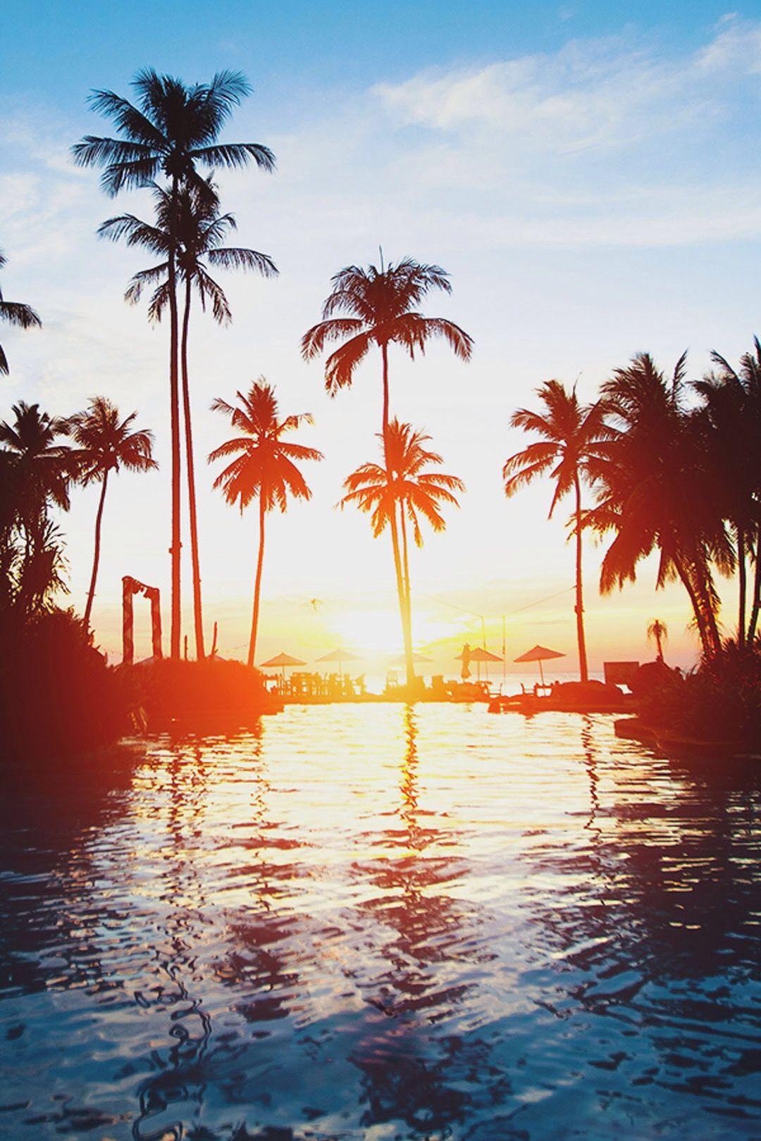Nature Sunset Beach Coconut Grove iPhone 7 wallpaper
