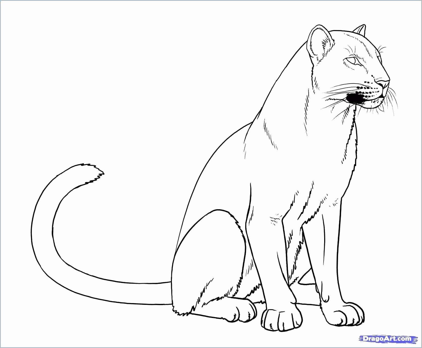 schwarzer panther ausmalbilder  my blog