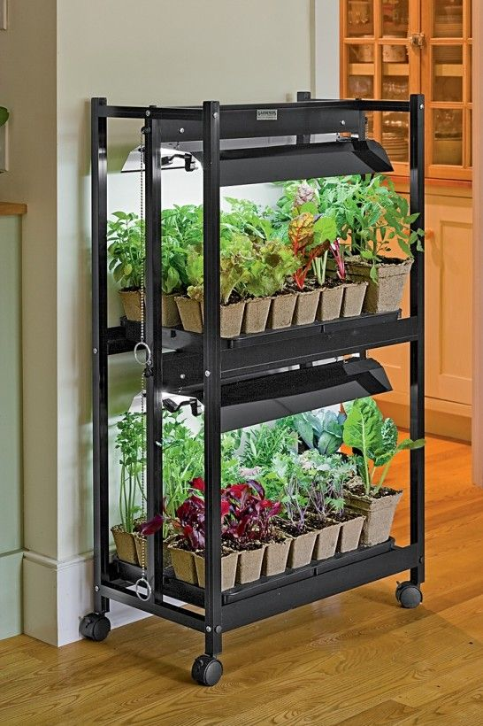 Apartment : Starting Vegetable Gardens From Seeds Indoors With Gardening  Island With Lighting System Tips On