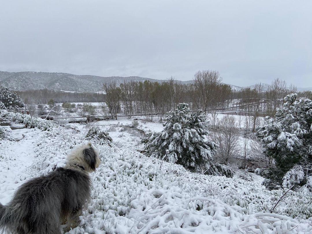 Nilo #bobtail #bobtailsofinstagram #oes #oldenglishsheepdog #oldenglishsheepdogsofinstagram #chien #perro #dog...