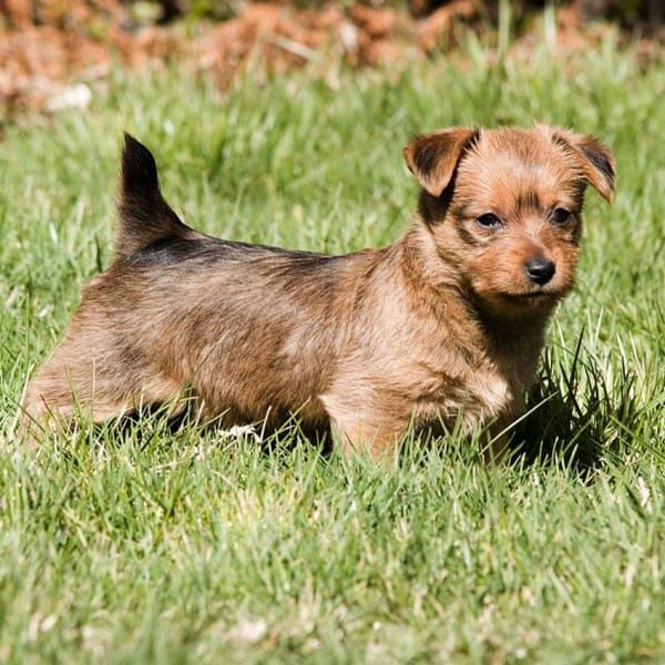 Hypoallergenic Dogs 28 Dogs That Don T Shed Cute Dogs Breeds Tiny Dog Breeds Super Cute Dogs
