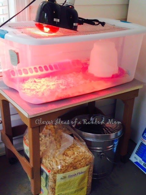 Backyard Brooder Box how to make a brooder box for baby chicks with plastic storage box