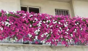 jardines en terrazas y balcones - Buscar con Google