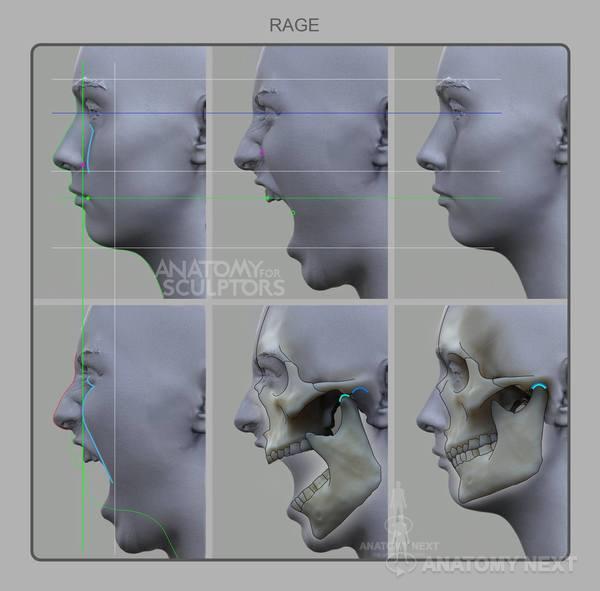 Anatomy Next Blog - Female Facial expressions - Smile & Rage