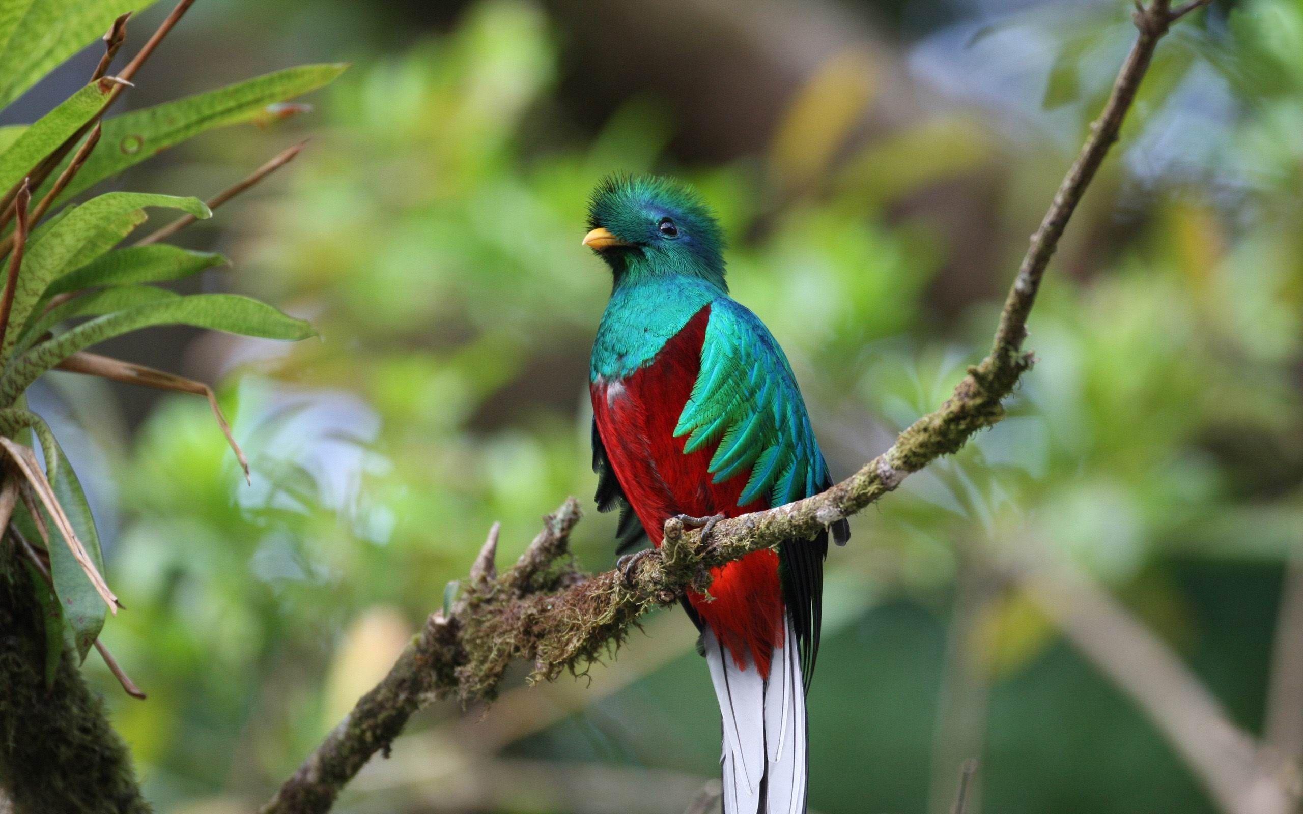 bird - Cerca con Google