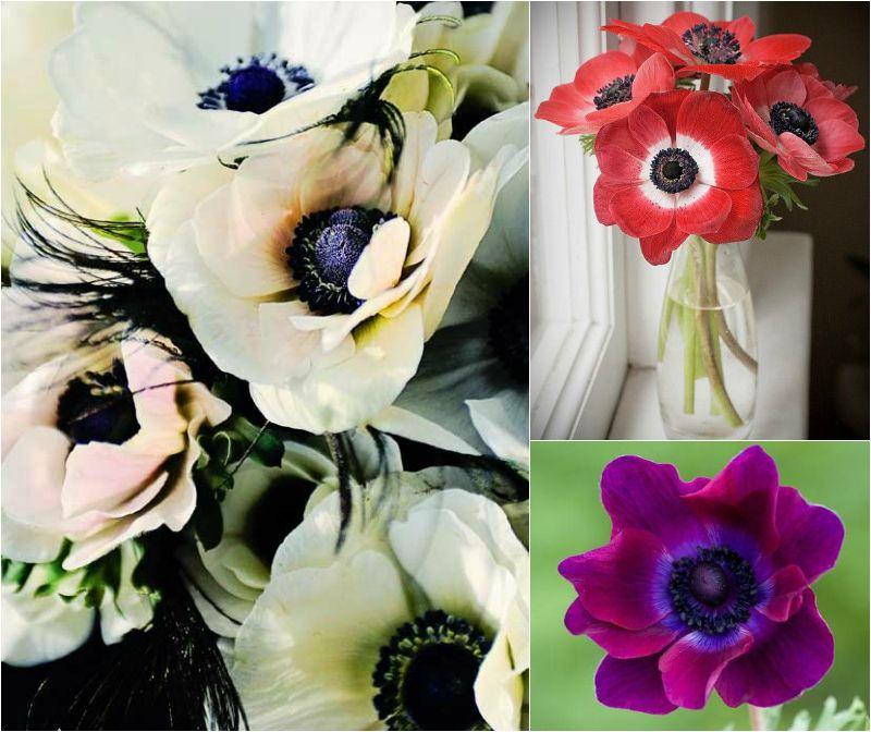 Typy Urody Jak Kwiaty True Winter Fractal Art Anemone