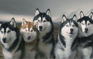 Siberian Husky Wallpapers Hd Beautiful Dogs Dog Photos Dog Breeds
