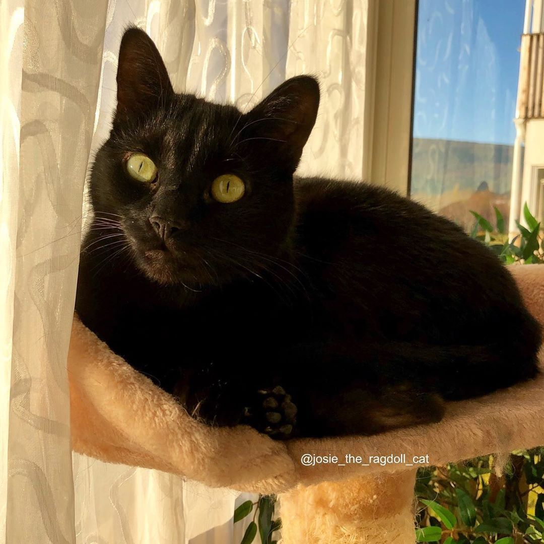 In America its National Black Cat Day today We think it