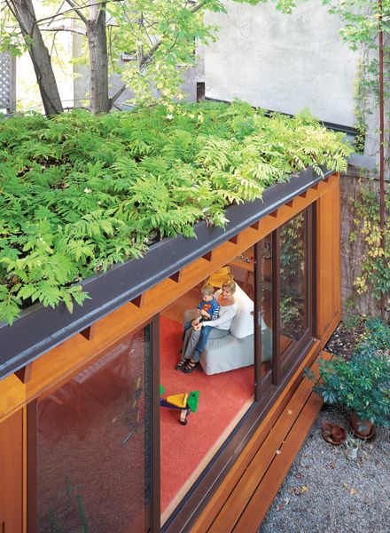 Living roof...love the use of ferns in this shaded area. | Container house, Building a container home, Shipping container homes