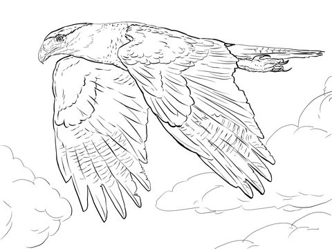 Northern Crested Caracara coloring page from Falcons