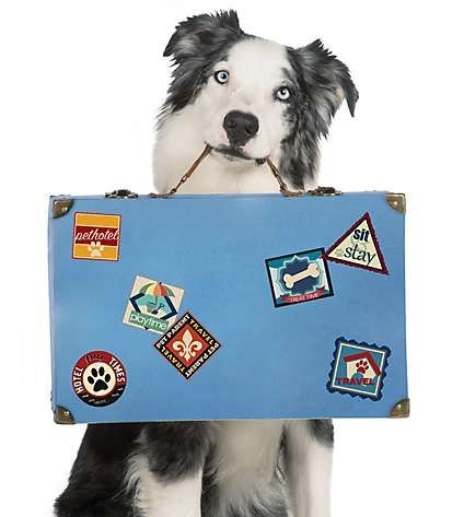 Soapy dog Service animal, Pet feeder, Dogs