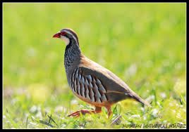 Aves - Google Search