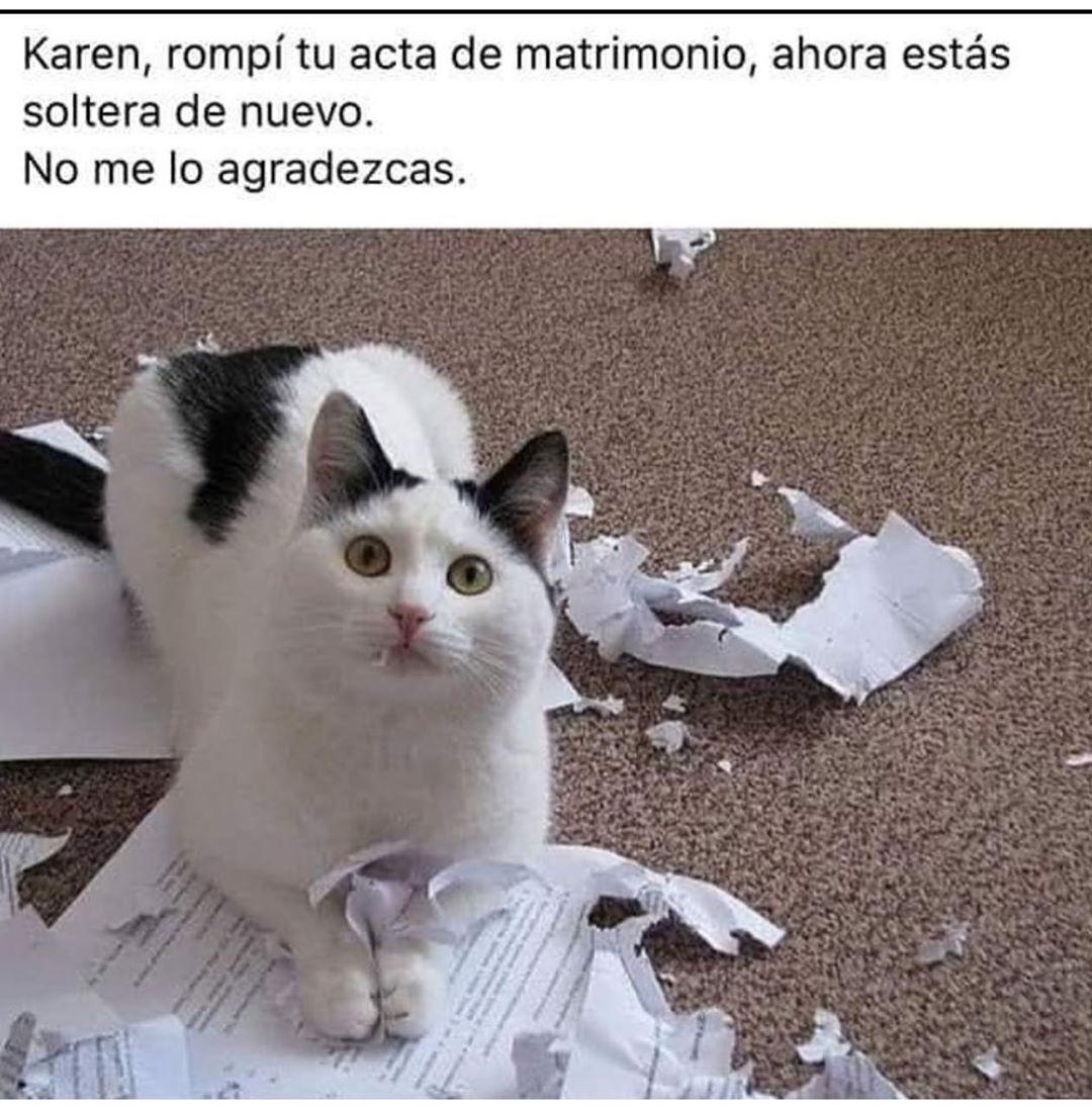 Memes De Karen Y El Gato Parte 5 Memes En Espanol La Mejor Recopilacion De Memes Lo Mas Viral De Internet Memes Memes Comicos Memes Divertidos