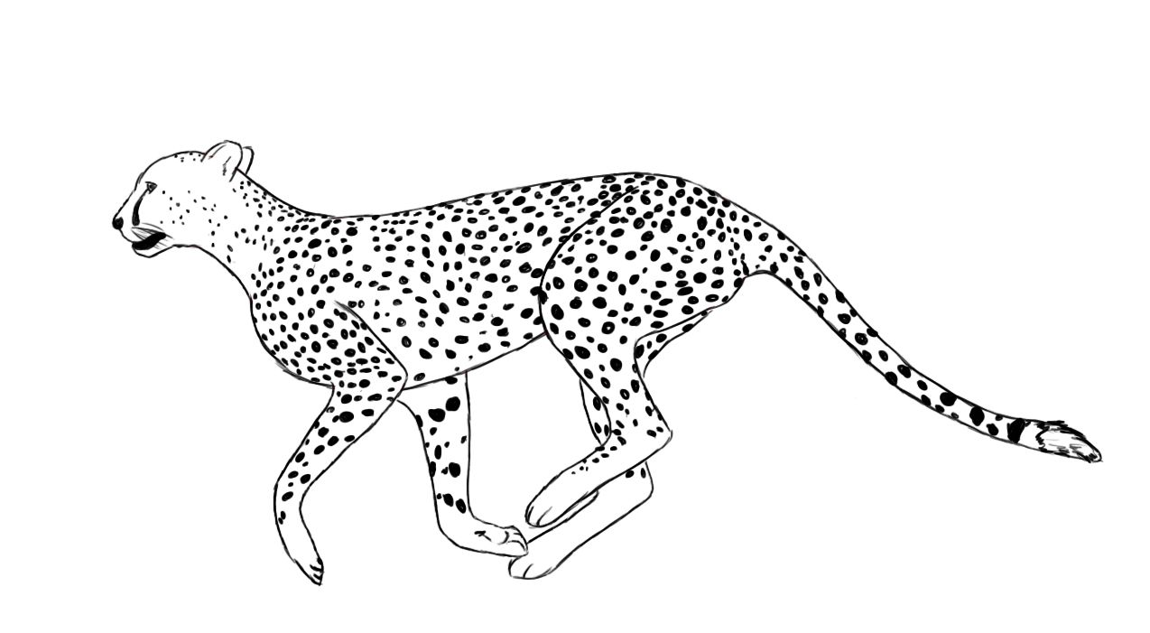 How To Draw A Cheetah Draw Central Cheetah Drawing Zoo Animal Coloring Pages Animal Coloring Pages